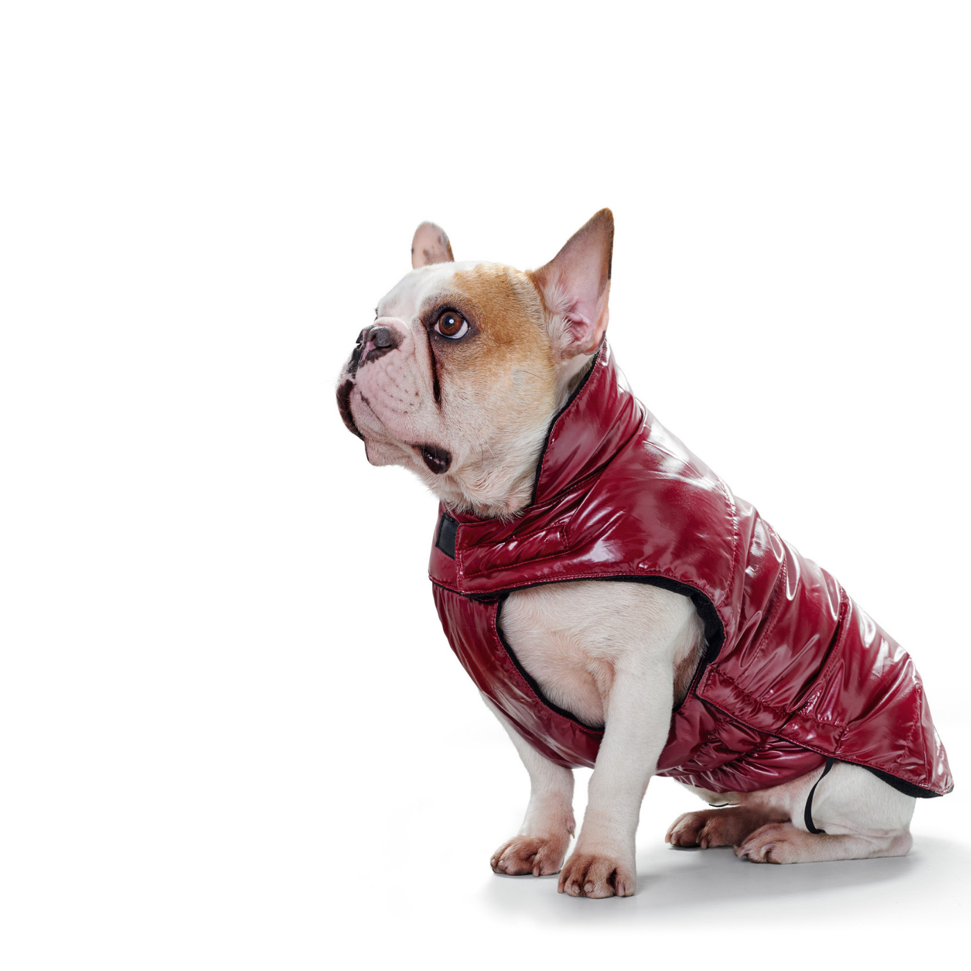 Cappottino Tampere Hunter Rosso per Cani - GEA Pet Shop - 657f1b474c7d